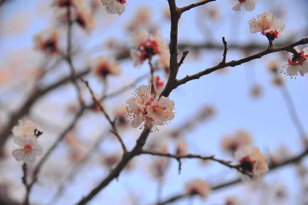 photo_2020-03-22_10-40-26.jpg